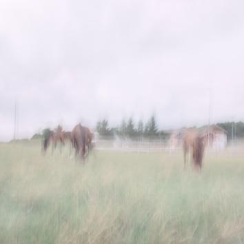 Sweden June 2016. Impressionist rural scene utilizing intentional camera movement. Copyright © Anders Stangl Photography