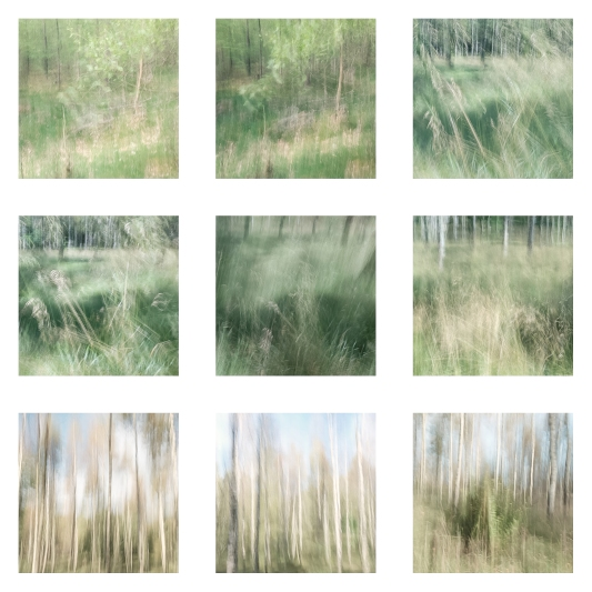 Perceptions Of A Forest - A Collection