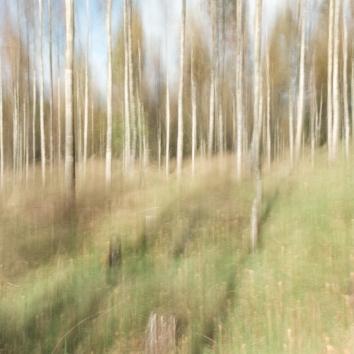 Perceptions Of A Forest - Volume Eighteen