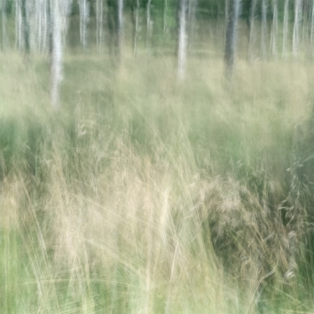 Perceptions Of A Forest - Volume Four