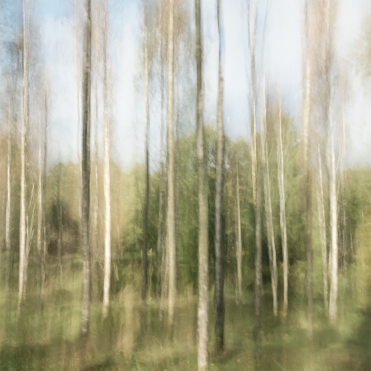 Perceptions Of A Forest - Volume Fourteen