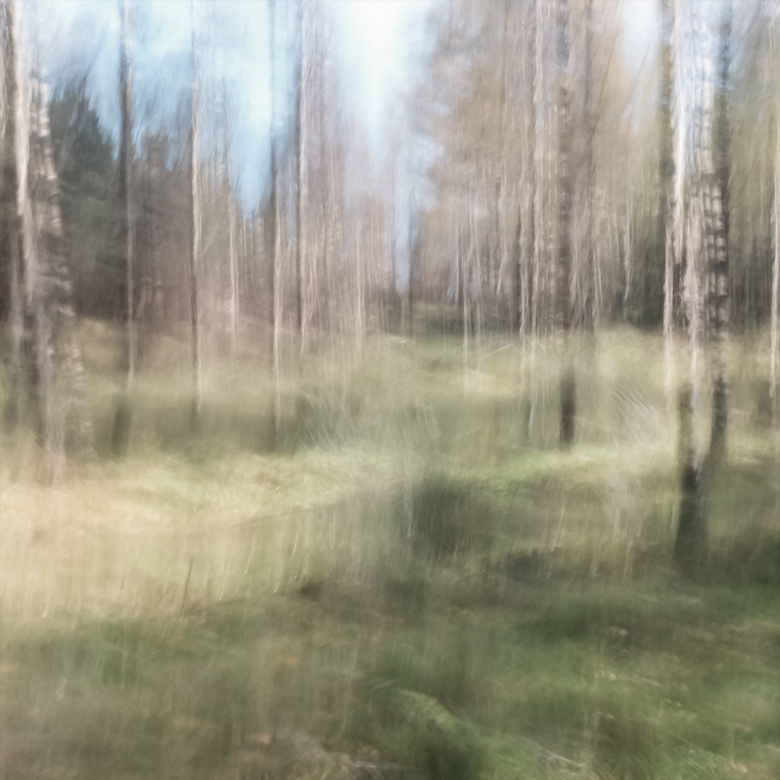 Perceptions Of A Forest - Volume Nine