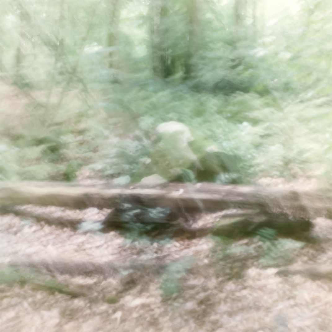 Perceptions Of A Forest - Volume Seven