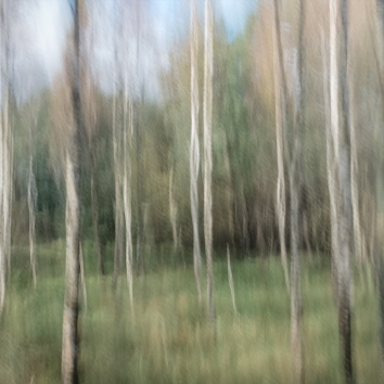 Perceptions Of A Forest - Volume Seventeen