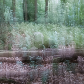 Perceptions Of A Forest - Volume Six