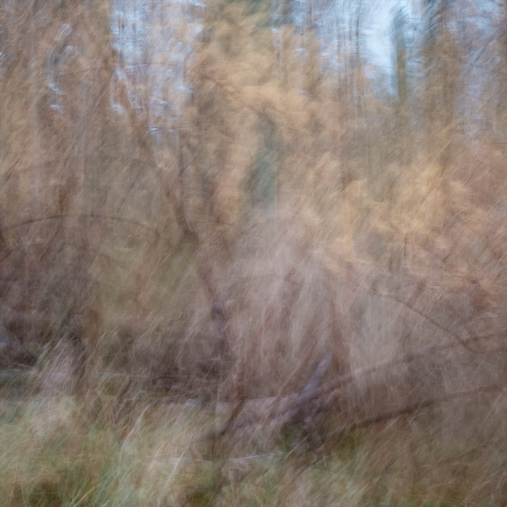 Sweden, November 2017Impressionist photography utilizing intentional camera movement. Fujifilm X-E2 | XF 35mm 1.4 R  © Anders Stangl Photography