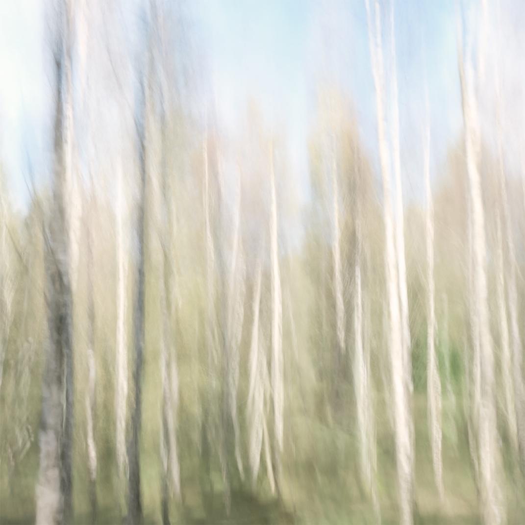 Perceptions Of A Forest - Volume Thirteen