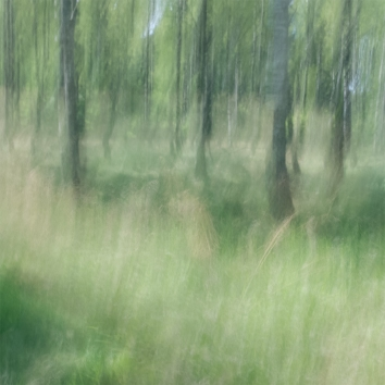 Perceptions Of A Forest - Volume Three