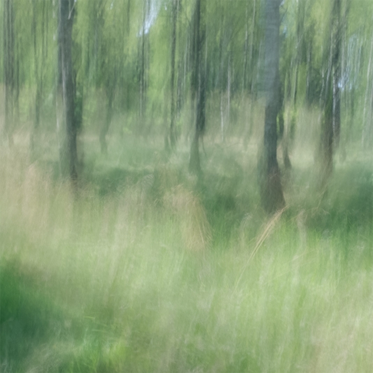 Sweden, July 2017Impressionist photography utilizing intentional camera movement. © Anders Stangl Photography
