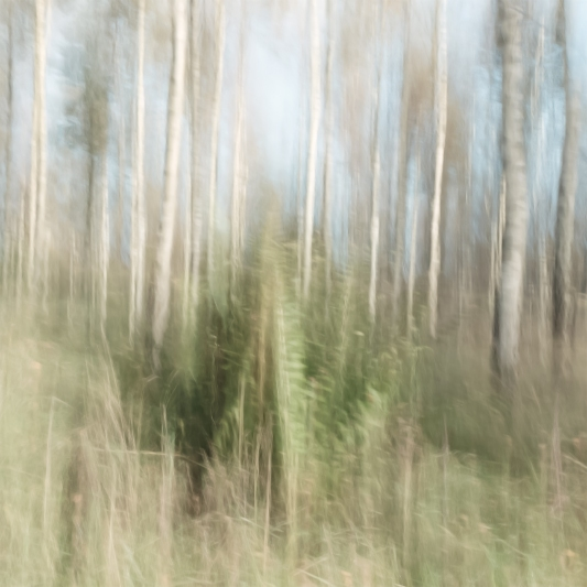 Perceptions Of A Forest - Volume Twelve