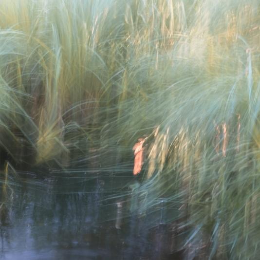 Perceptions Of A Pond - Volume Eighteen