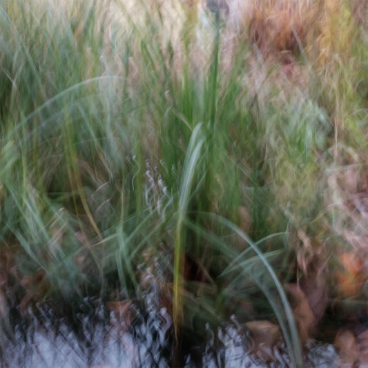 Perceptions Of A Pond - Volume Eleven