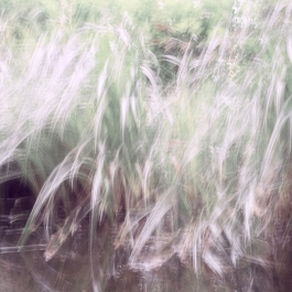 Perceptions Of A Pond - Volume Fifteen