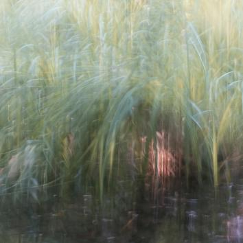 Perceptions Of A Pond - Volume Nineteen