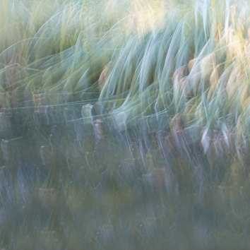 Perceptions Of A Pond - Volume Seventeen