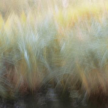 Perceptions Of A Pond - Volume Thirteen