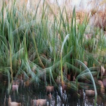 Perceptions Of A Pond - Volume Twelve