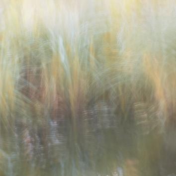 Perceptions Of A Pond - Volume Twenty