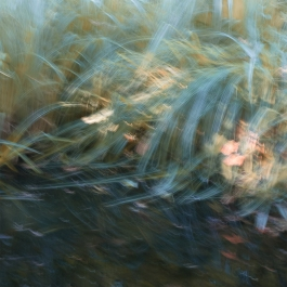 Perceptions Of A Pond - Volume Twenty Five
