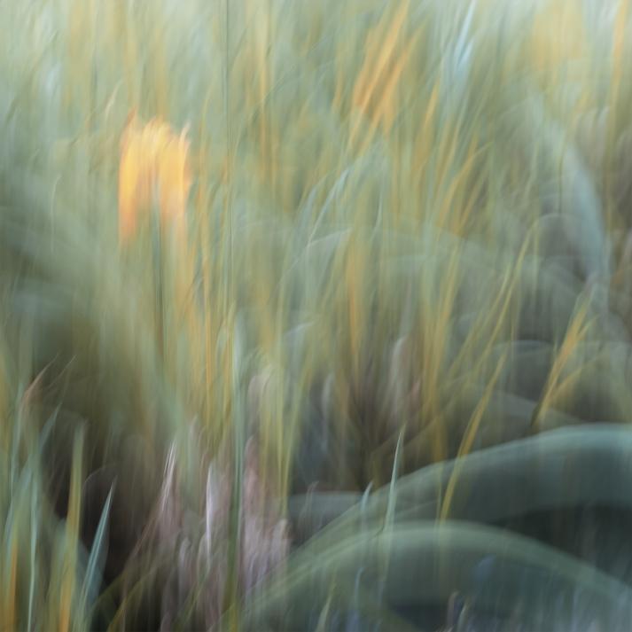 Perceptions Of A Pond - Volume Twenty One