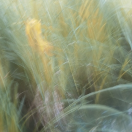 Sweden, June 2018 Impressionist photography utilizing intentional camera movement. Shot with Fujifilm X-E2 and a Jupiter 8 50m 2.0 lens© Anders Stangl Photography