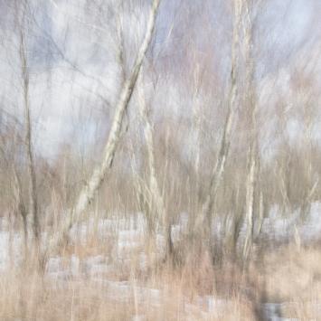 Perceptions Of Reality - Volume Seventeen