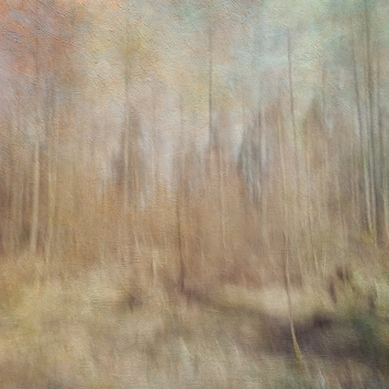 Impressionistic forest scene . Single intentional camera movement exposure and texture layers. Volume Fifteen in this series