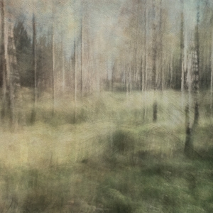 Impressionistic autumn scene . Single intentional camera movement exposure and texture layers. Volume 33 in this series.