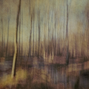 Impressionistic forest scene . Single intentional camera movement exposure and texture layers. Volume 25 in this series.