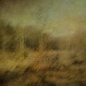 Impressionistic forest scene . Single intentional camera movement exposure and texture layers. Volume 24 in this series.
