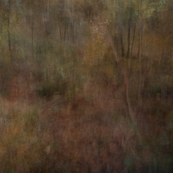 Impressionist forest scene. Single intentional camera movement exposure and texture layers.