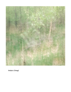 Impressionist forest spring scene . Single intentional camera movement exposure