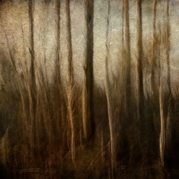 Impressionist forest scene. Volume 11 in this series