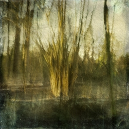 Impressionist forest scene. Volume 50 in this series
