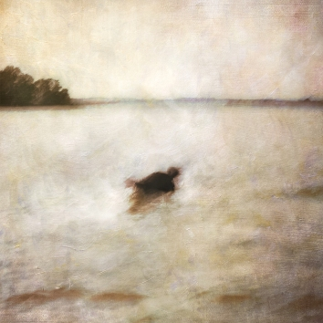Impressionist abstract scene of a dog in a lake. Volume 47 in this series