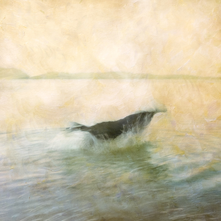 Impressionist scene of a dog in a lake. Volume 42 in this series