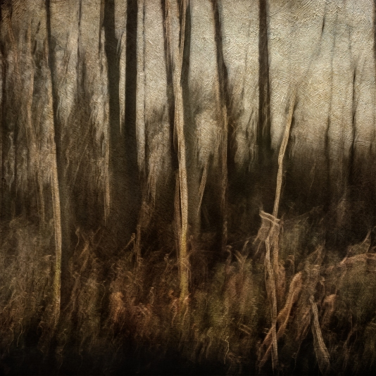 Impressionist forest scene. Volume 14 in this series