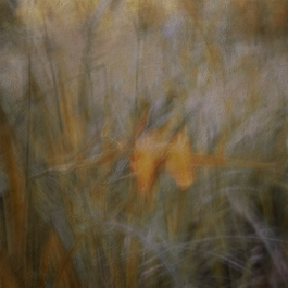 Impressionist flower photography by a pond.