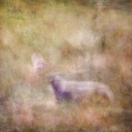 Impressionist abstract summer scene. Volume 60
