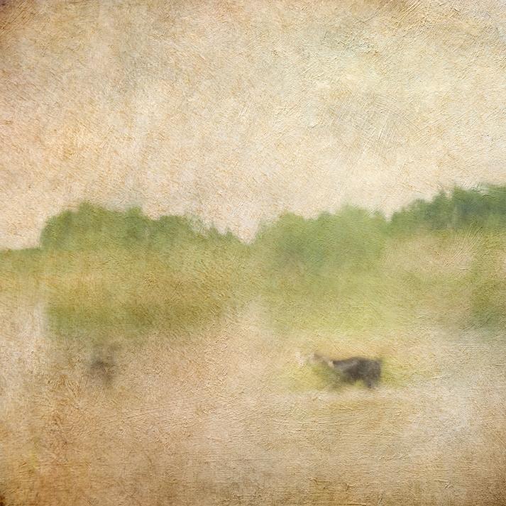 Impressionist scene of a dog in a lake. Volume 65
