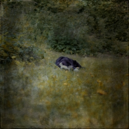Impressionist scene of a dog in a garden. Volume 64