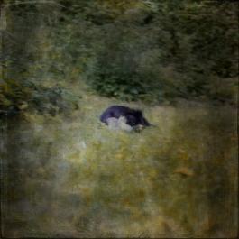 Impressionist scene of a dog in a garden. Volume 66