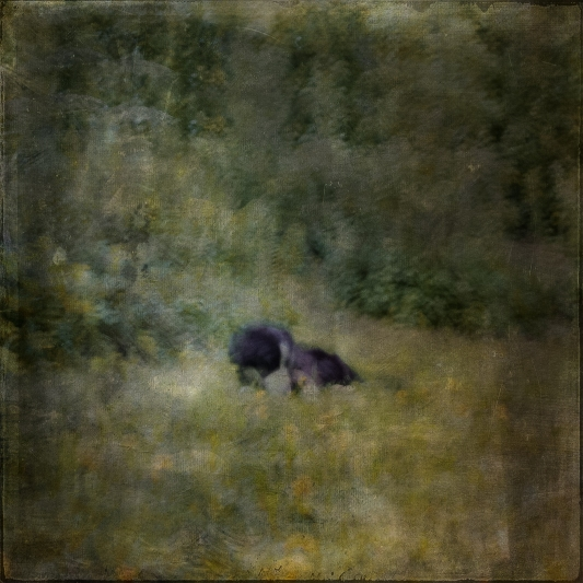 Impressionist scene of a dog in a garden. Volume 63