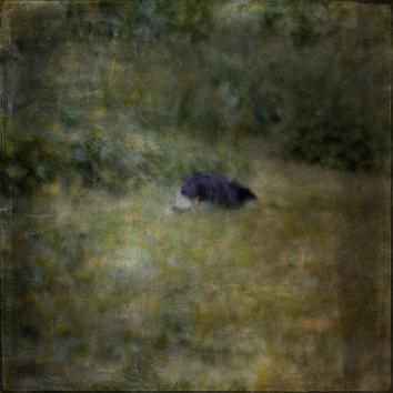 Impressionist scene of a dog in a garden. Volume 62