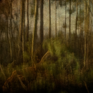 Impressionist forest scene. Volume 13 in this series