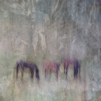 Impressionist rural scene of horses in a summer meadow. Volume 2 in this series