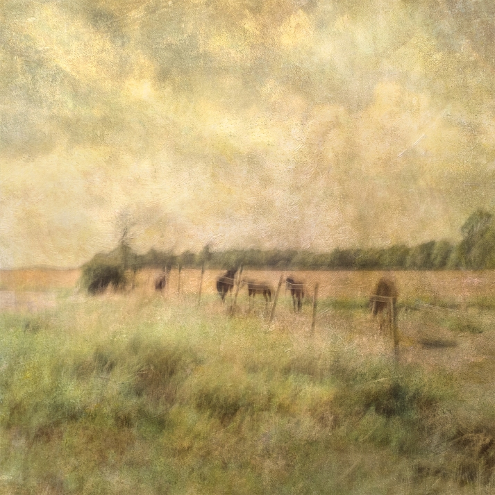 Impressionist rural scene of horses in a summer meadow. Volume 39 in this series