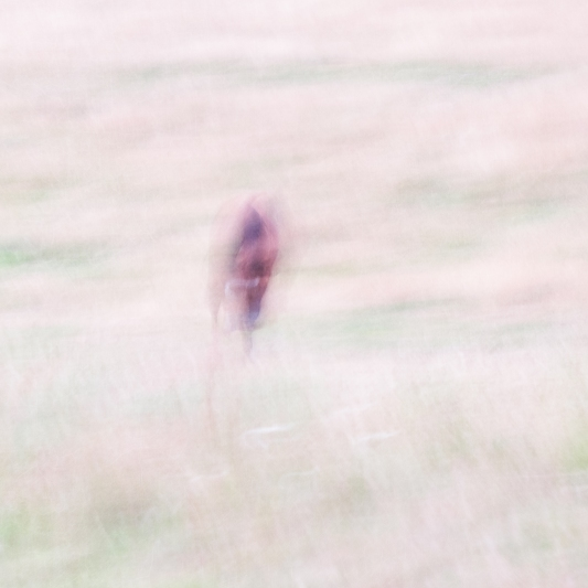 Impressionist rural scene of a in a summer meadow. Volume 36 in this series