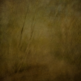 Impressionist forest scene. Volume 12 in this series