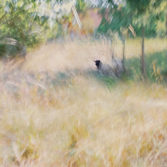 Impressionist rural scene. Volume 27 in this series